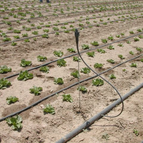 Horticulture & Fertigation